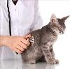 Ветеринарные клиники в Кашире
